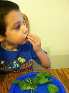 Eating his leaves.